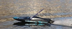 Picture of Black Marlin BL